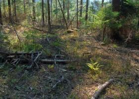 Pe Masivul Ceahlău se taie în continuare copacii haotic